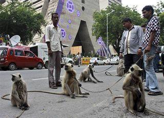 100928-monkeys-hmed-7a.grid-8x2